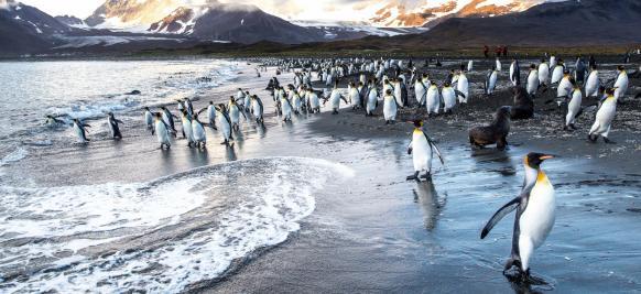 croisière en Antarctique de luxe