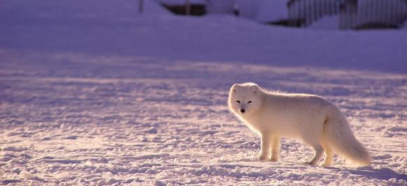 croisière d'exploration en Antarctique