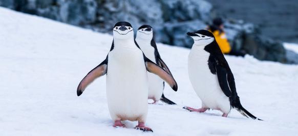 croisière Arctique (pingouins)