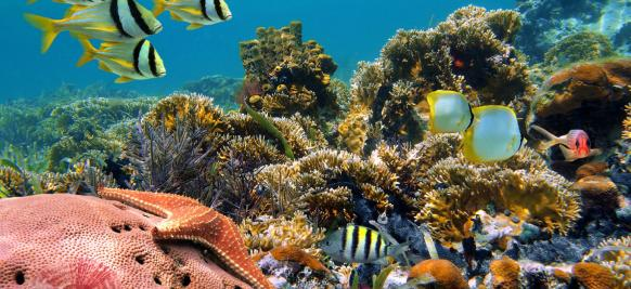 croisière luxe en océan indien
